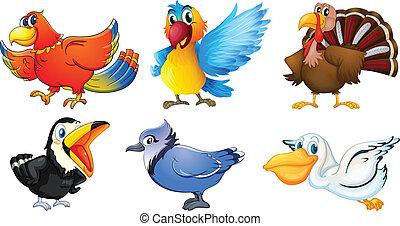 diferente, pássaros, tipos