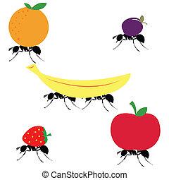 diferente, proceso de llevar, hormigas, fruits