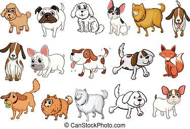 diferente, raças, de, cachorros