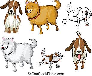 diferente, specie, perros