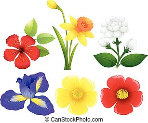 diferente, tipos, de, flores