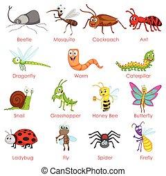diferente, variedad, de, insectos