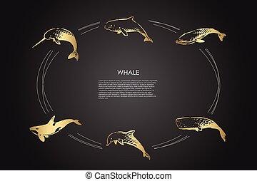 diferente, vector, concepto, ballena, delfín, esperma, conjunto, -, asesino, tipos
