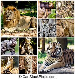 différent, animal, collage