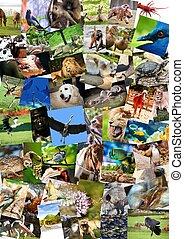différent, animaux, collage, sur, cartes postales