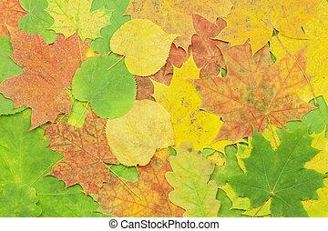 différent, arbre, feuilles, automne