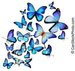 différent, beaucoup, papillons, isolé, fond, blanc