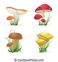 différent, champignon, arbres