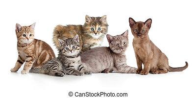 différent, chaton, ou, chats, groupe
