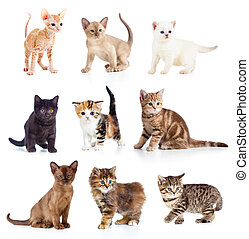 différent, chatons, collection