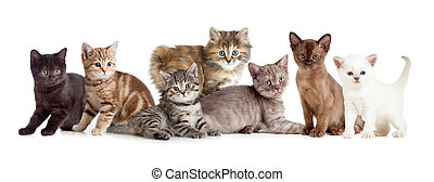 différent, chats, groupe, ou, chaton