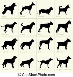 différent, chiens, espèces