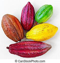 différent, coloré, cacao, blanc, boîtiers, sorts