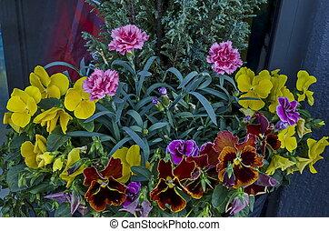 différent, district, printemps, pot, balcon, haut, drujba, argile, fin, fleurs