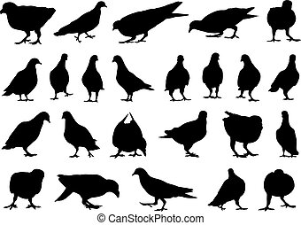 différent, ensemble, colombes