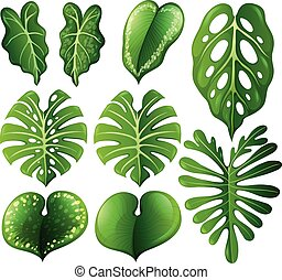 différent, ensemble, genres, feuilles