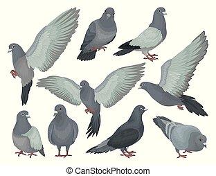 différent, ensemble, pigeons, gris, vecteur, fond, illustrations, blanc, poses, colombes