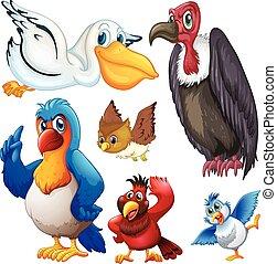 différent, espèce, oiseaux