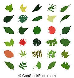 différent, feuille, colour., illustration, vecteur, arbres