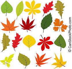différent, feuilles, isolé, collection, automne, blanc