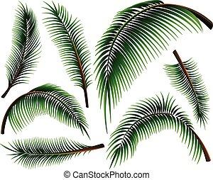 différent, feuilles paume, tailles