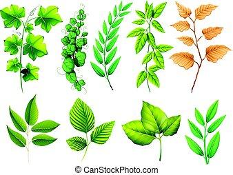 différent, feuilles vertes, types