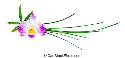 différent, fleur, feuilles, dendrobium, vert, composition