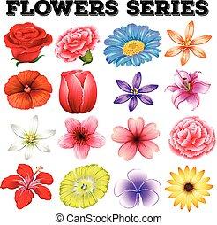 différent, fleurs, espèce