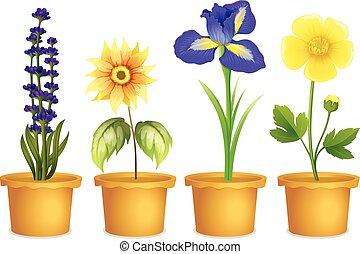 différent, fleurs, pots, types