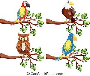 différent, genres, oiseaux, branche