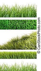 différent, herbe, assortiment, blanc