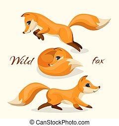 différent, joli, renard, images, animal, sauvage, poses