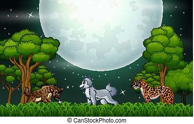 différent, jungle, animal, nuit