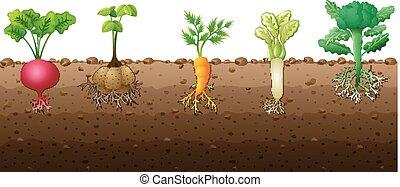 différent, légumes, espèce