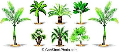 différent, paume, types, arbres