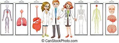 différent, système, trois, humain, médecins, diagrammes