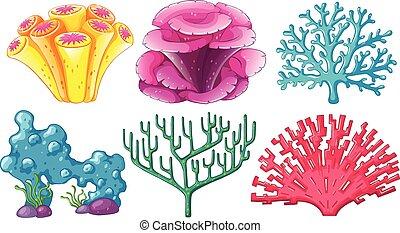 différent, type, récif corail