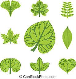 différent, vecteur, types, feuilles