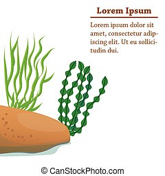 Different algae cartoon illustration
