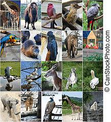 Different animals collage