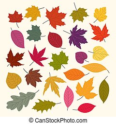 Different autumn leaves vector collection isolated on white background