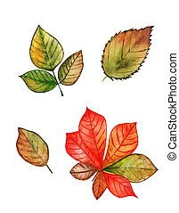 Different autumn leaves watercolor set on white background