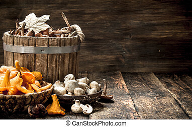 Different autumn mushrooms.