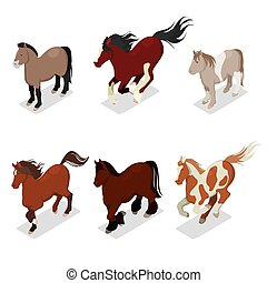 Different Breeds Horses Set with Pony, American Paintshorse and Tinker. Isometric vector flat 3d illustration