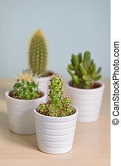 Different  cactus in pots