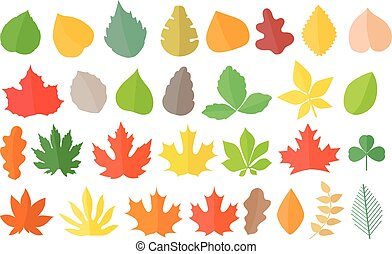 Different color autumn leaves vector collection. Leaves isolated on white