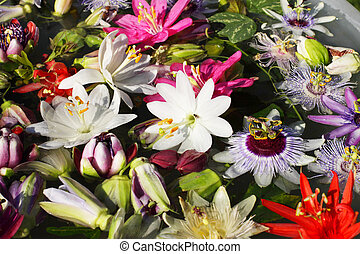 different colored passionflowers, passion flower, floating ...