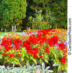 Different colors of flowers in the park