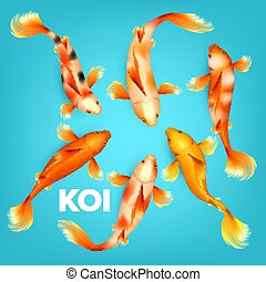 Different Colors Of Koi Exotic Fish Set Vector