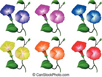 Different colors of morning glory flowers illustration